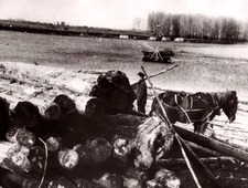 Timber supplies to the bank of the Belaya River for the construction of Industrial Complex No.18 in 1947